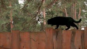 Черный кот идя вверх деревянная загородка сток-видео