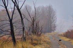 Черный кот и туманные деревья стоковое фото rf