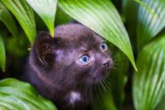 Черный кот идя вниз с улицы Стоковые Фотографии RF