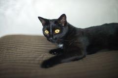 Черный кот лежит на кровати стоковое изображение rf