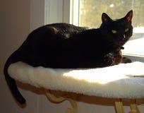 Черный кот наслаждается сиденьем у окна наблюдая Outdoors Стоковые Фотографии RF