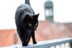 Черный кот на крыше смотря вниз стоковое изображение rf