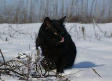 Черный кот на прогулке зимы стоковые фотографии rf