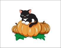 Черный кот на тыкве Стоковая Фотография RF
