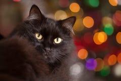 Черный кот на bokeh предпосылки Стоковое фото RF