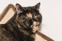 Черный кот представляет к изображению Стоковая Фотография