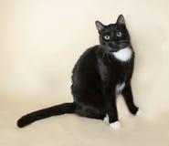 Чёрный с белыми пятнами кот
