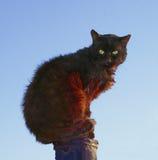 Черный кот при зеленые глаза сидя на столбце стоковое изображение rf