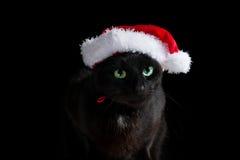 Черный кот при шляпа Санты смотря прямо Стоковая Фотография RF