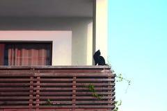 Черный кот сидит на балконе дома Стоковые Фотографии RF