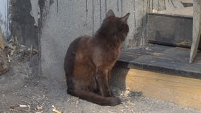 Черный кот сидит акции видеоматериалы