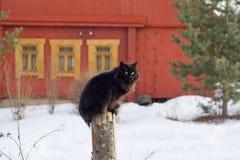 Черный кот сидя на столбе Стоковое Изображение