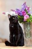 Черный кот сидит около вазы с цветками. Стоковое фото RF
