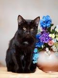 Черный кот сидит около малой вазы с цветками. Стоковое Изображение