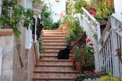 Черный кот сидя на лестницах Стоковые Фотографии RF