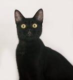Черный кот сидя на сером цвете стоковое фото rf