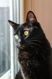 Черный кот смотря вне окно Стоковое фото RF