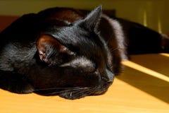 Черный кот спит на желтом деревянном столе под теплой солнечностью на день стоковые изображения