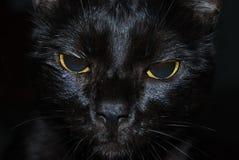 Черный кот с желтыми глазами, крупный план 1 Стоковые Фотографии RF