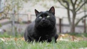 Черный кот с зелеными глазами на открытом воздухе Черный кот лежит снаружи на траве акции видеоматериалы