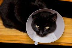 Черный кот с конусом любимчика Стоковые Изображения