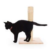 Черный кот с царапая столбом стоковая фотография