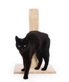 Черный кот с царапая столбом стоковое фото rf