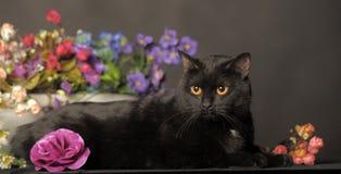 Черный кот с цветками Стоковые Фото