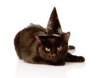 Черный кот с шляпой ведьмы на хеллоуин На белизне Стоковая Фотография