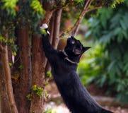 Черный кот точит свои когти на дереве yew стоковое фото rf