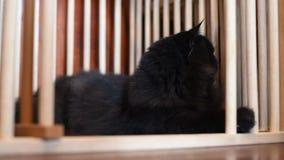 черный кот видеоматериал