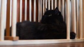 черный кот сток-видео