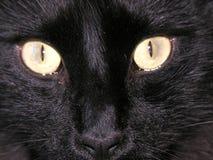 черный кот Стоковые Фото