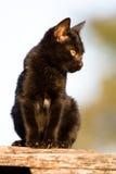 черный кот Стоковые Изображения