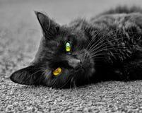 черный кот Стоковая Фотография
