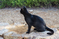 черный кот стоковое фото