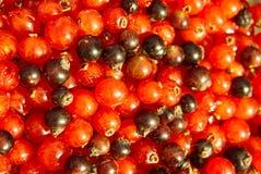 черный красный цвет Стоковые Изображения RF