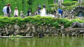Черный лебедь в пруде сада Valsanzibio - холмах Colli Euganei Padova Euganean, Италии сток-видео