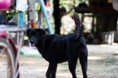 Черный маленький щенок стоковое фото rf