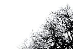 Черный мертвый силуэт дерева Стоковое Изображение RF