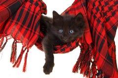 черный милый красный цвет котенка гамака Стоковые Фотографии RF