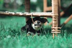Черный милый щенок стоковые фото