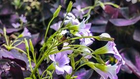 Черный муравей Стоковая Фотография RF