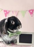 Черный мягкий кролик зайчика Стоковая Фотография