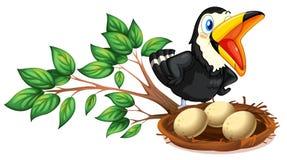 Черный наблюдать птицы гнездо с яичками Стоковое Изображение RF