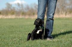 черный новый щенок Стоковые Изображения RF