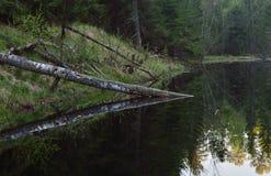 Черный пруд Стоковое Изображение RF