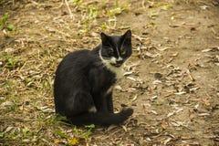 Черный рассеянный кот стоковые изображения