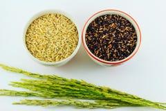 Черный рис, коричневый рис в чашке и неочищенные рисы Стоковые Изображения
