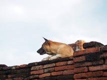 Черный рот и коричневая собака на старой кирпичной стене Стоковые Изображения